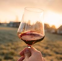 Rødvin i glas